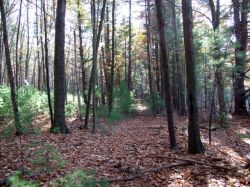 Acreage/Land for Sale in Hollis, NH 03049