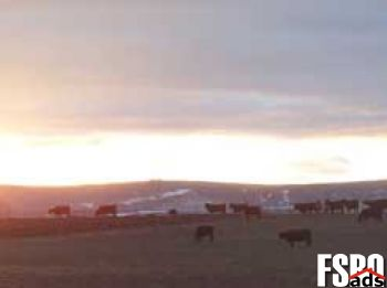 Farm/Ranch for Sale in New Plymouth, ID 83655